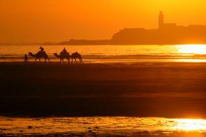 Producer Morocco casablanca