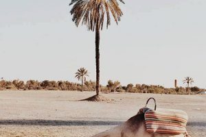 Sand Dunes 02