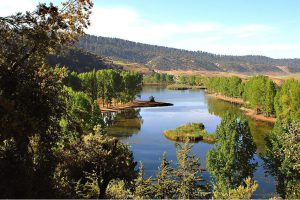 Landscapes Montagne & Forest