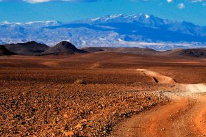 Roky Desert 12