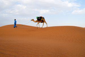 randonnee-chameliere-desert-maroc-1024x683